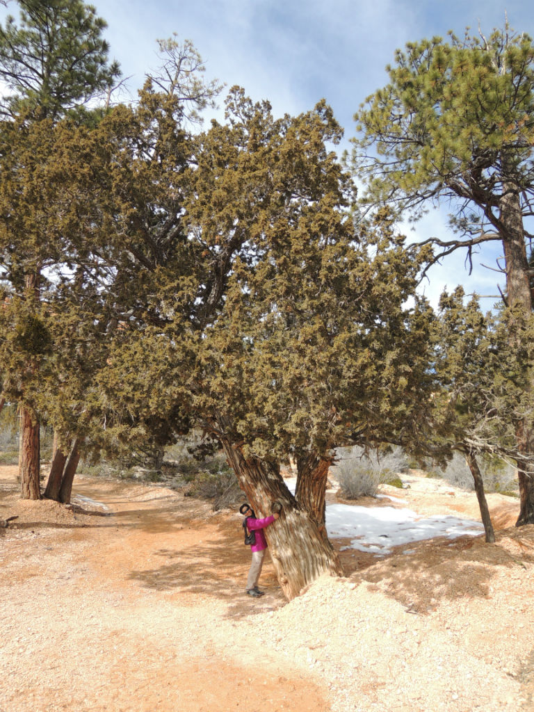Bryce Canyon Winter17