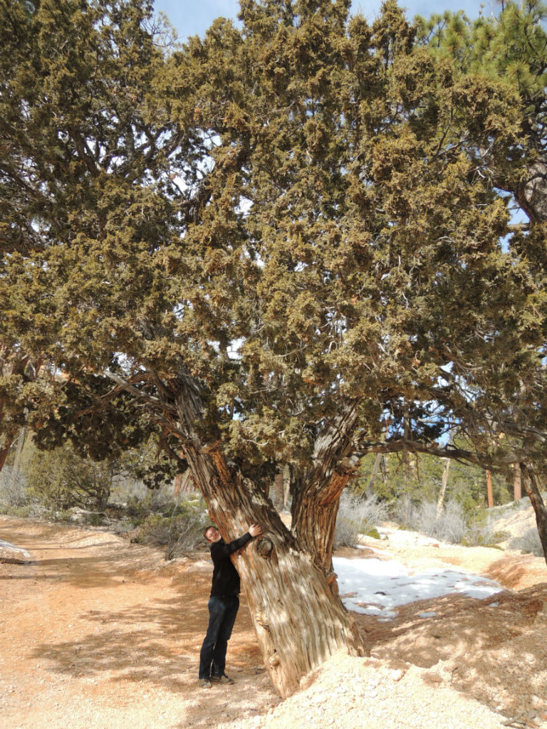 Bryce Canyon Winter18