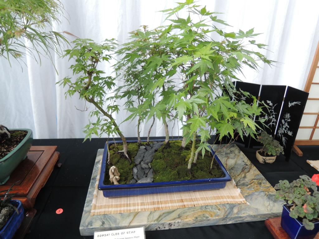 Bonsai Show2