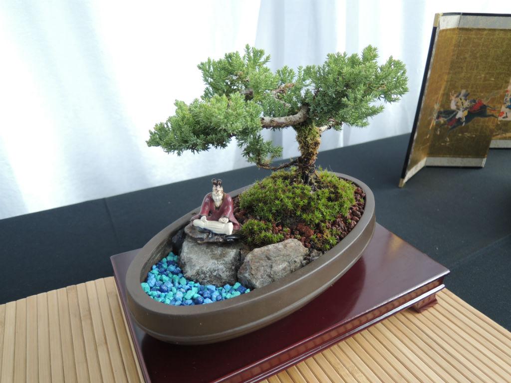 Bonsai Show4