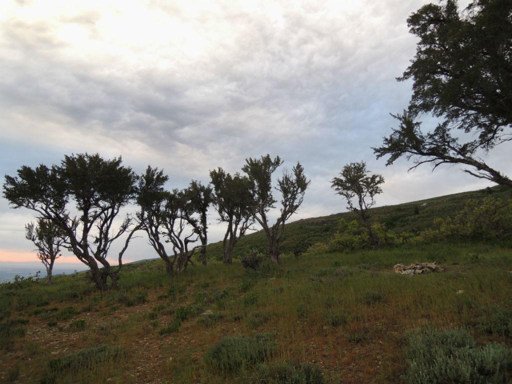 Kenney Creek Trail11