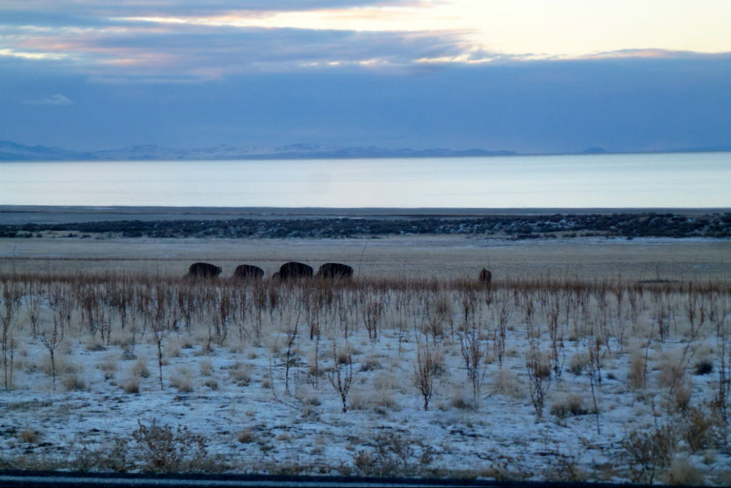Antelope Island12