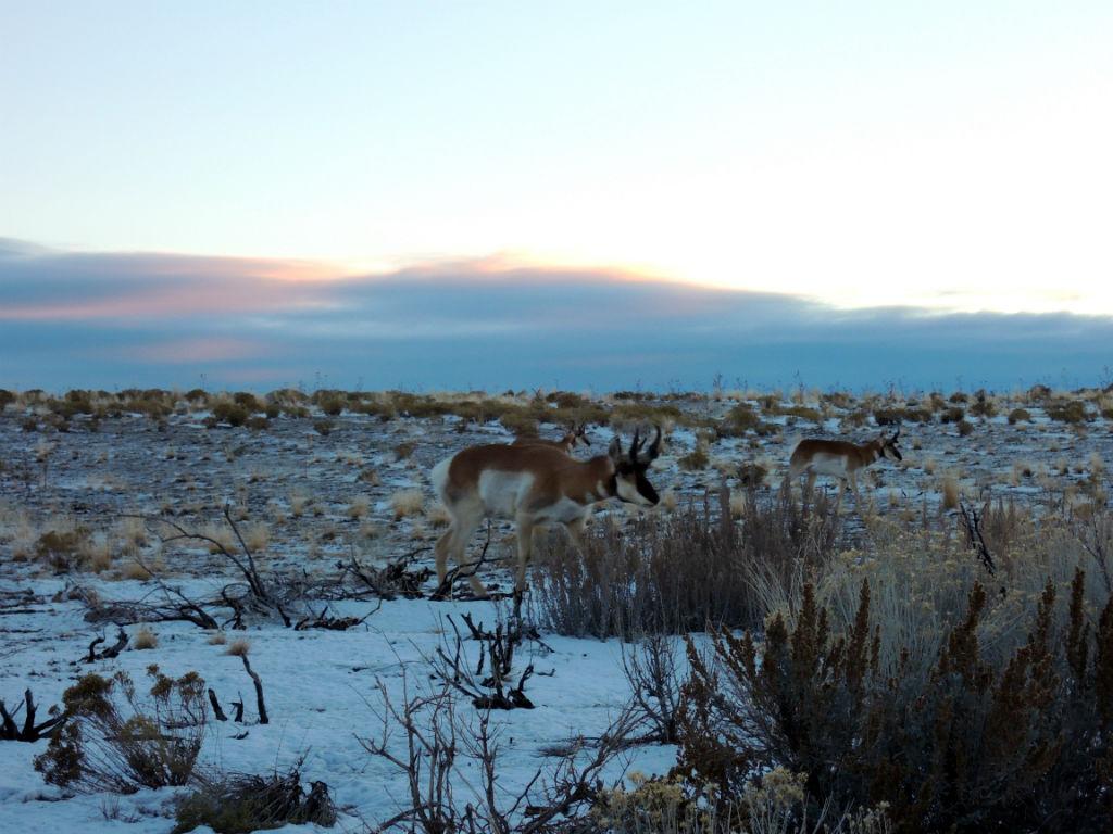 Antelope Island14