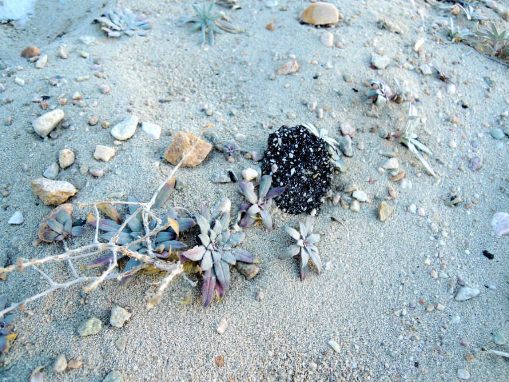 Little rocks and plants on the beach.