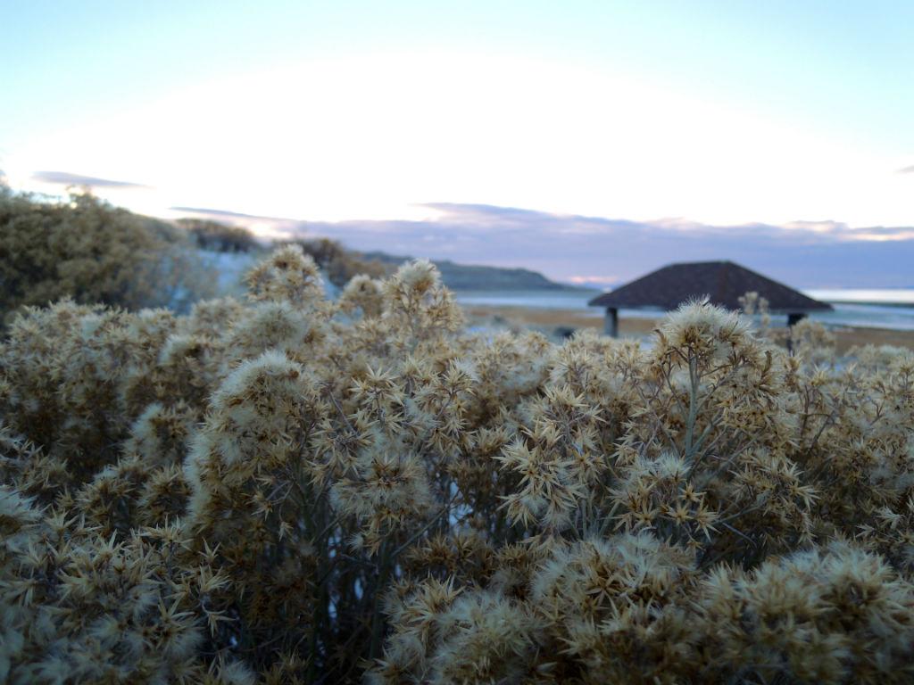 Antelope Island6
