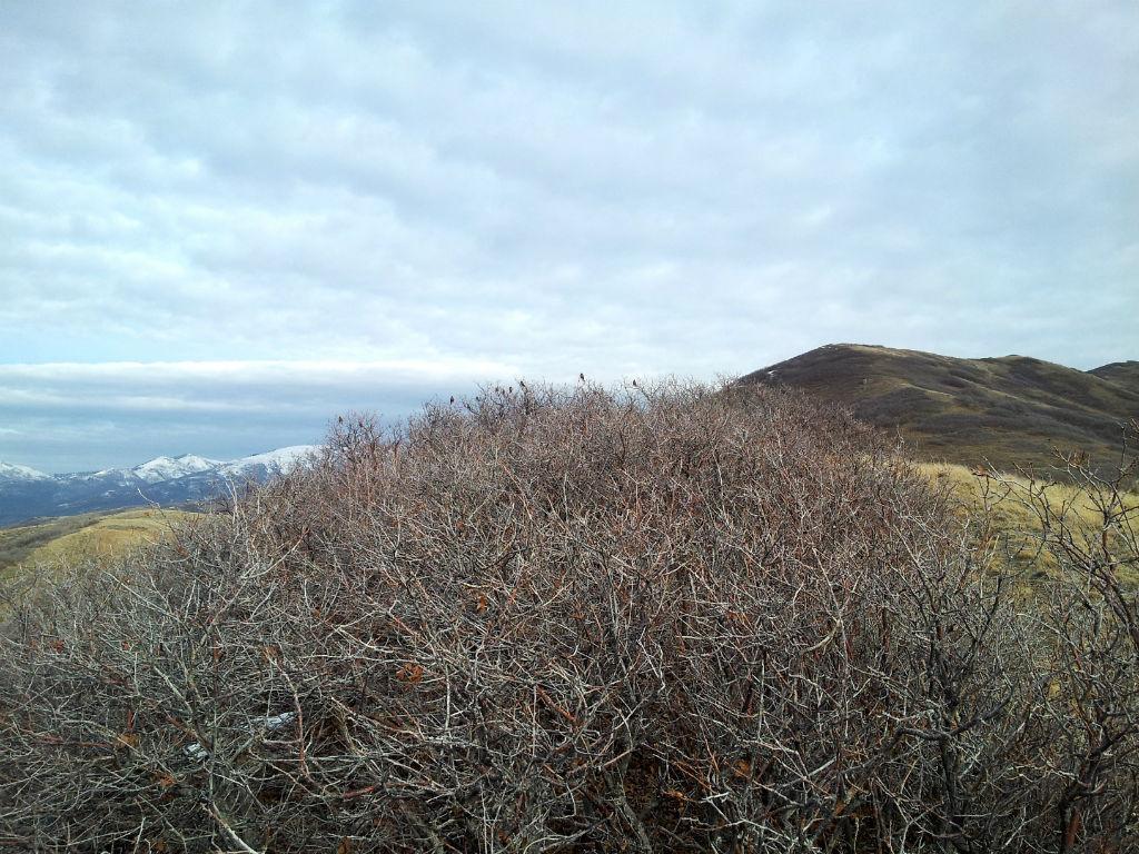 Wild Rose Trail6
