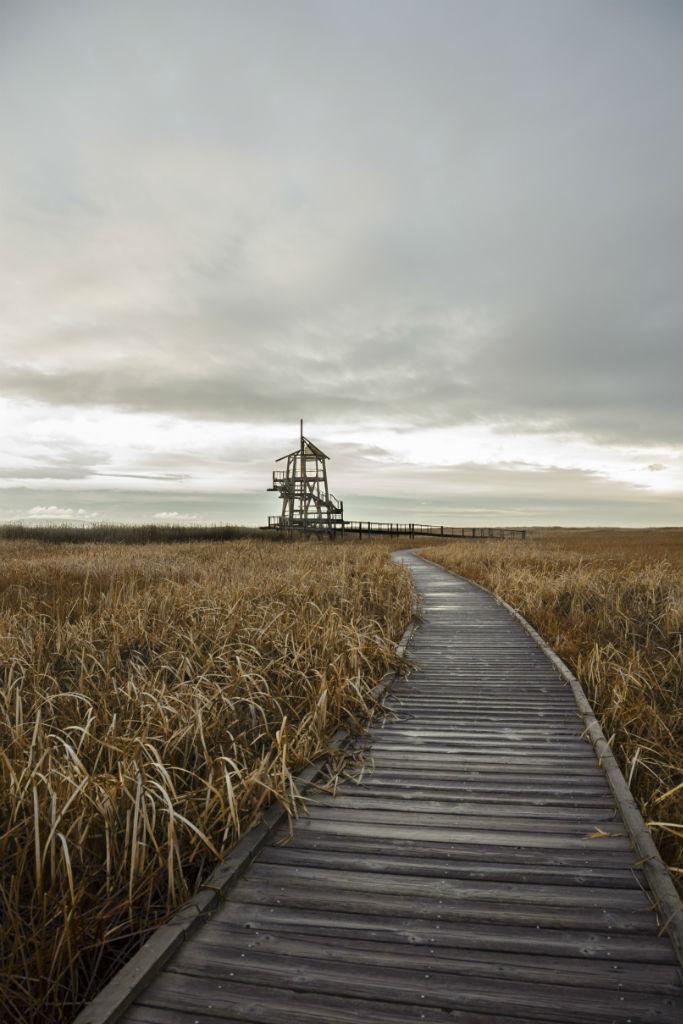 Shorelands Preserve11