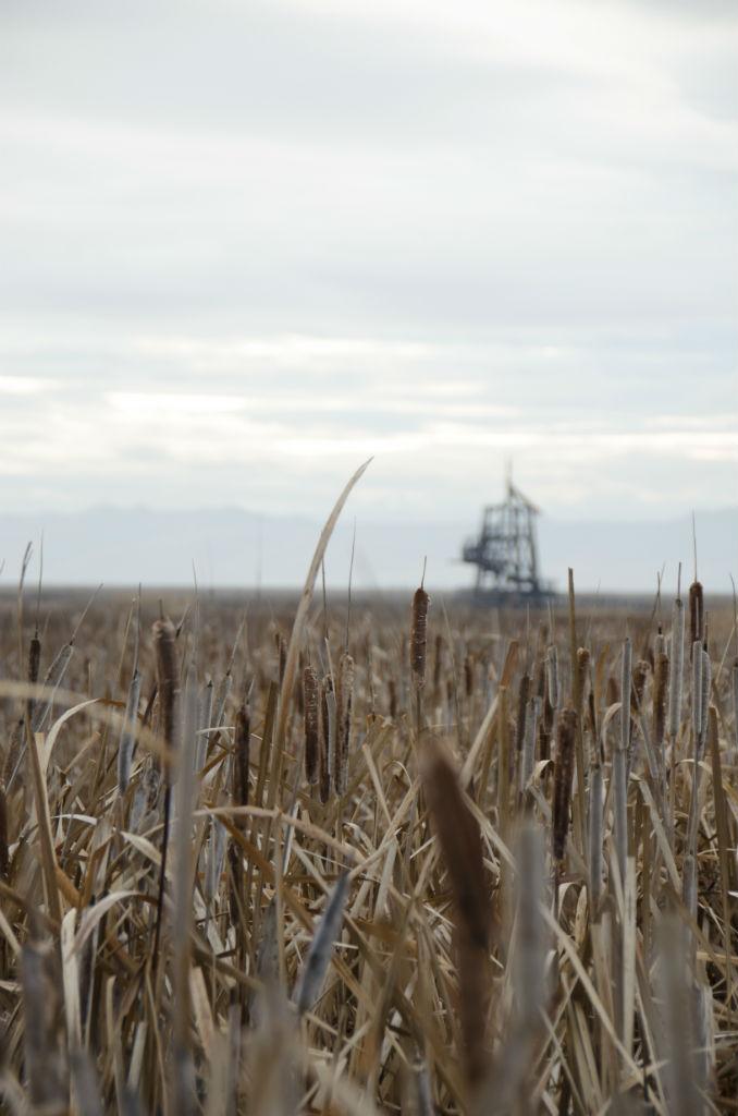 Shorelands Preserve16