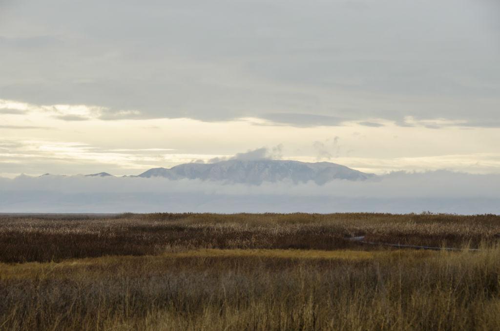 Shorelands Preserve5