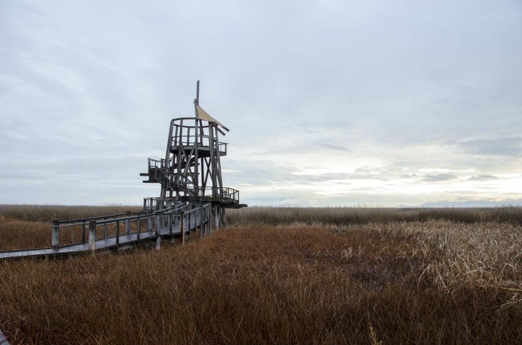 Shorelands Preserve7