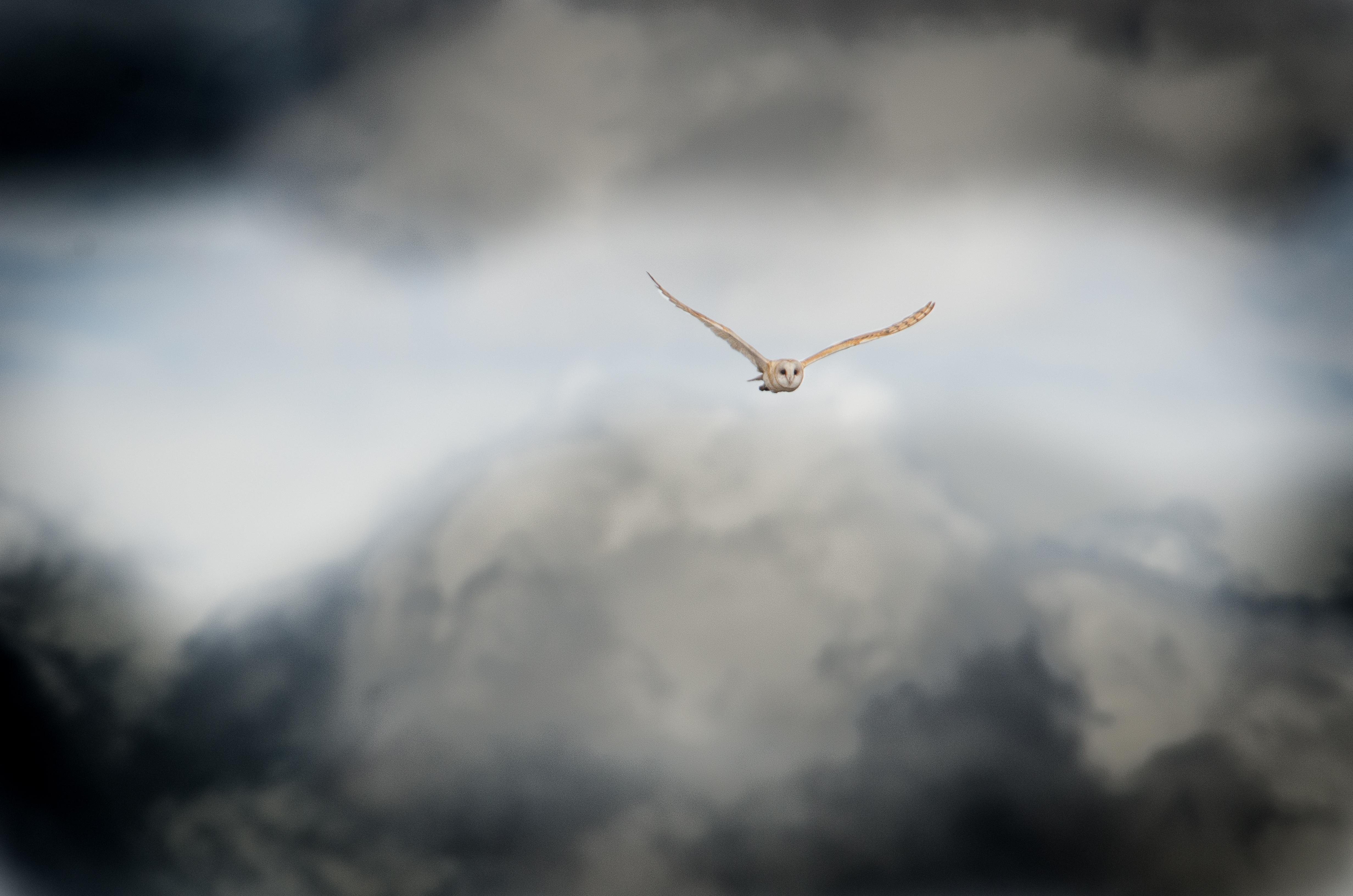 Owls16